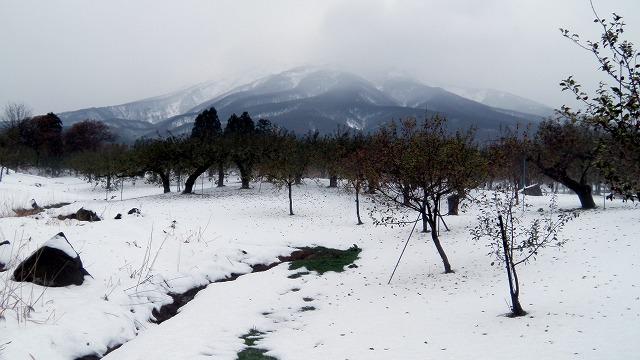 雪の止み間!見てリンゴもぎ開始